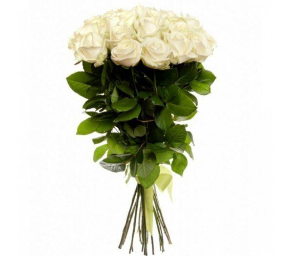 Розы Гиганты Краснодар