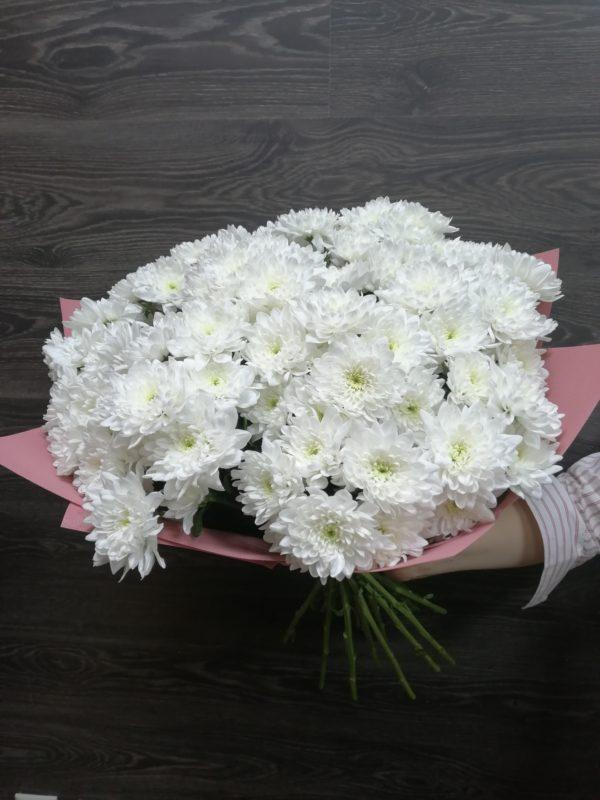 Купить хризантему в Краснодаре